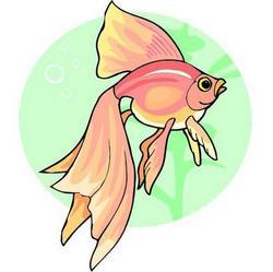 Коломна Рыба