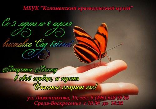 Новости Коломны   Сад бабочек Фото (Коломна)   kultura iskusstvo tvorchestvo v kolo