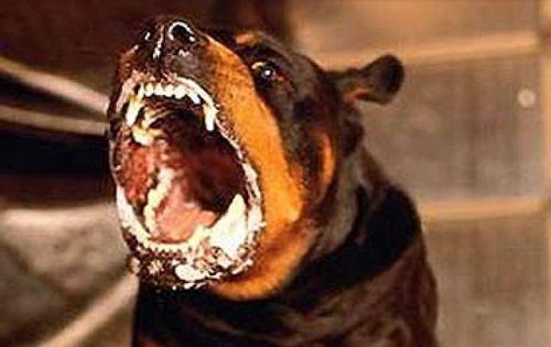 В этом году в Коломне сложилась неблагоприятная ситуация с бешенством животных