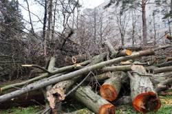 лес деревья валежник сухостой горелый