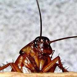 Ваши письма: Тараканы атакуют