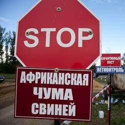 В Коломенском районе обнаружен незаконный свиномогильник