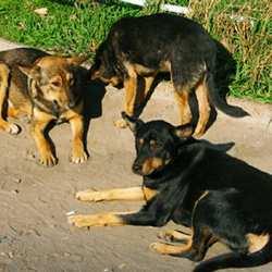 В Московской области заработала программа по гуманному регулированию численности безнадзорных животных
