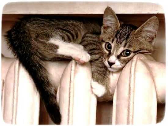 отопление тепло Коломна батарея кошка кот