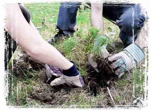 Ежегодная акция «Лес Победы» пройдет в Коломне