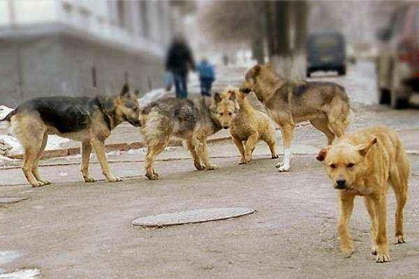 коломна собаки