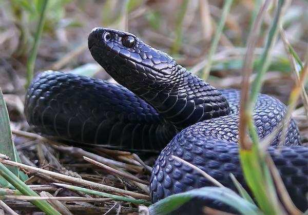 В лесах опасайтесь змей!